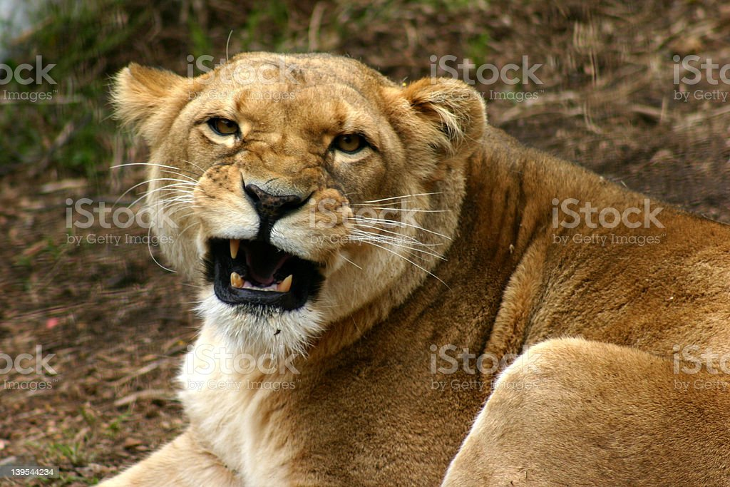 The real King royalty-free stock photo