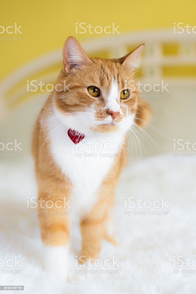 The red cat stock photo