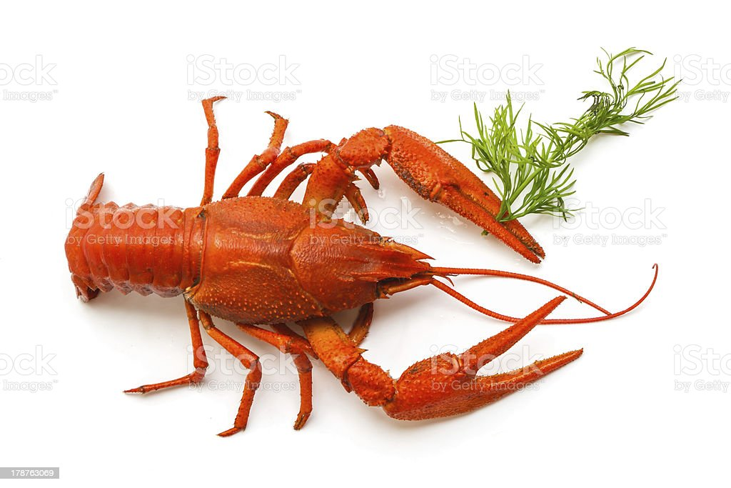 the red lobster royalty-free stock photo