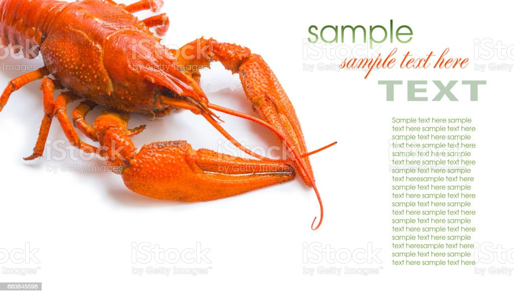 the red lobster stock photo