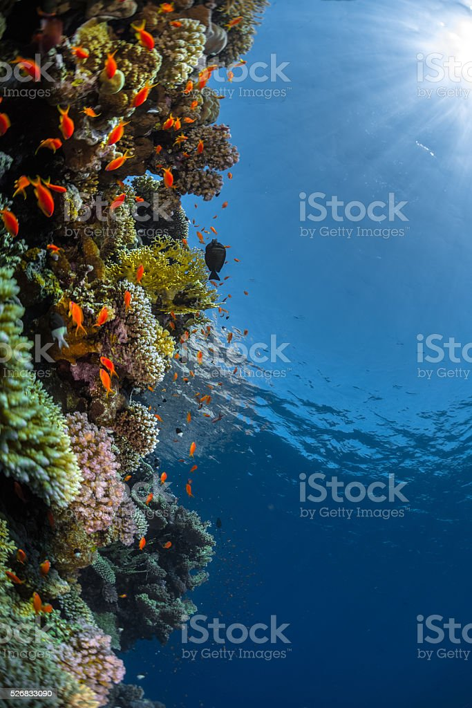 The Red Sea stock photo