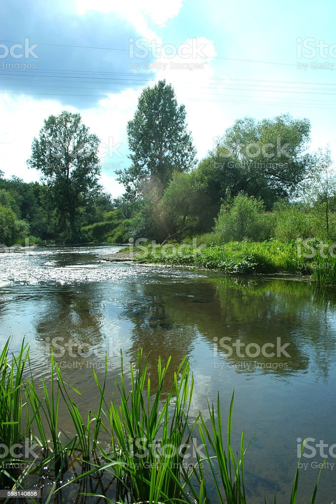 The reeds on the background of water ripples stock photo