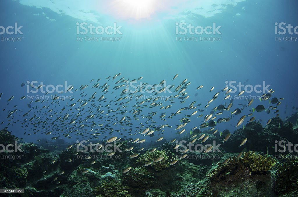 The reefs at the sea of cortez stock photo