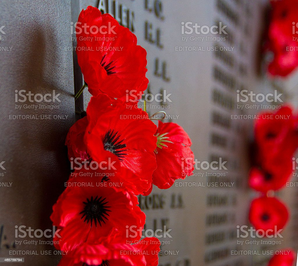 The remembrance poppy stock photo