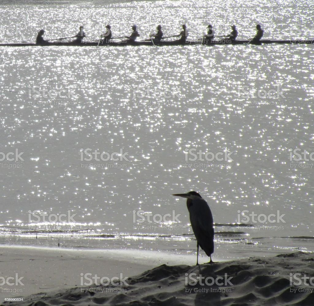 The reward of rowing with friends stock photo