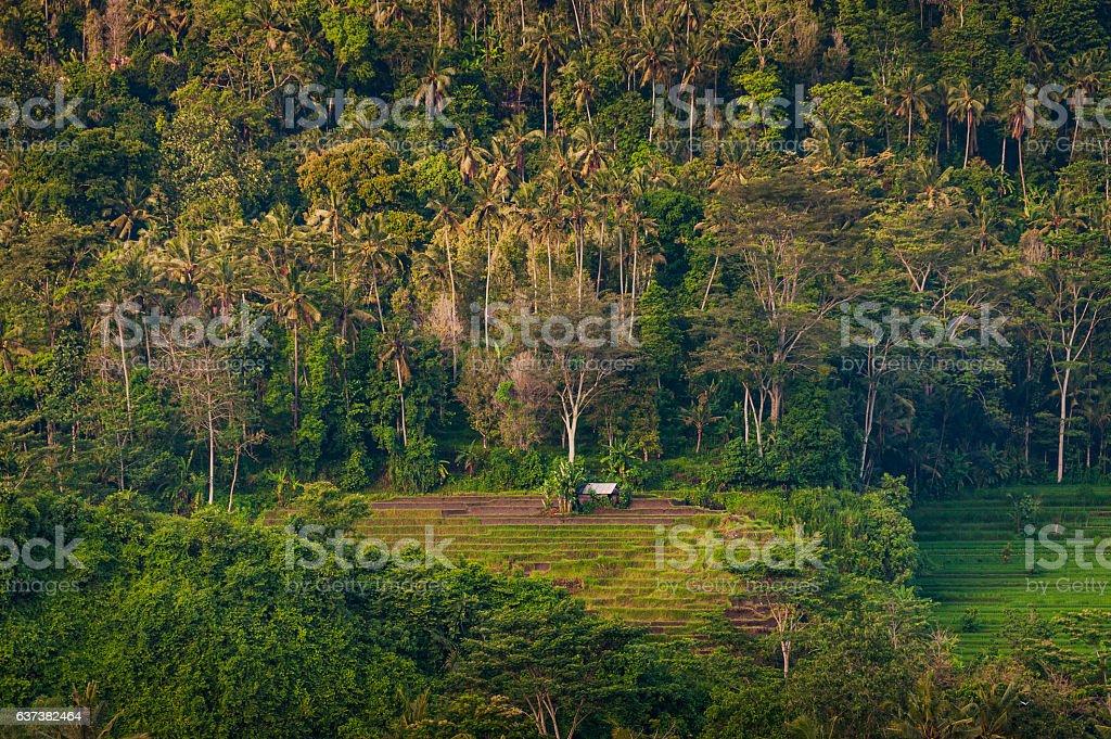 The Rice Fields of Sidemen, Bali, Indonesia stock photo