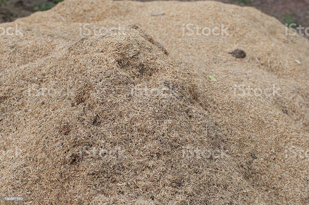 the rice husk for making fertilizer stock photo