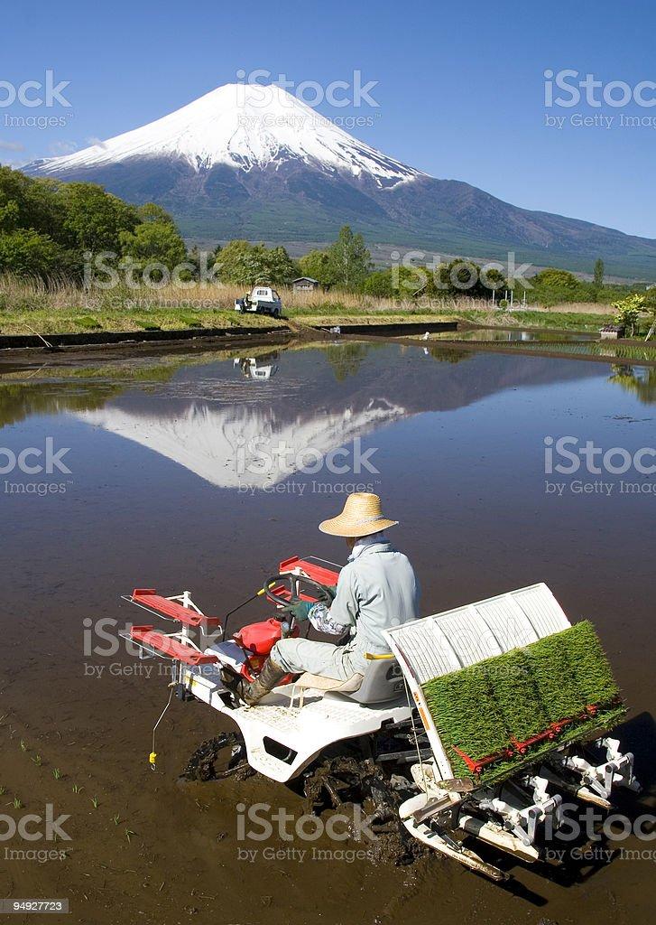 The Rice Planter royalty-free stock photo