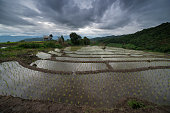 The rice terrace farm