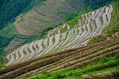 The rice terrace fields scenery in spring