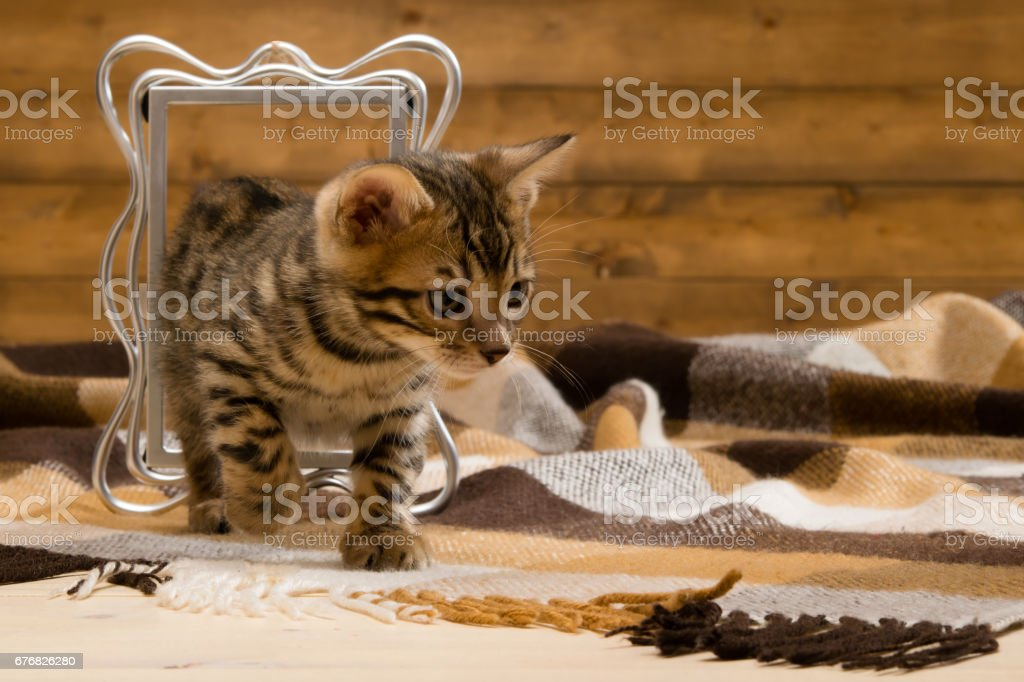 the right of a kitten in a photo frame a place for an inscription stock photo