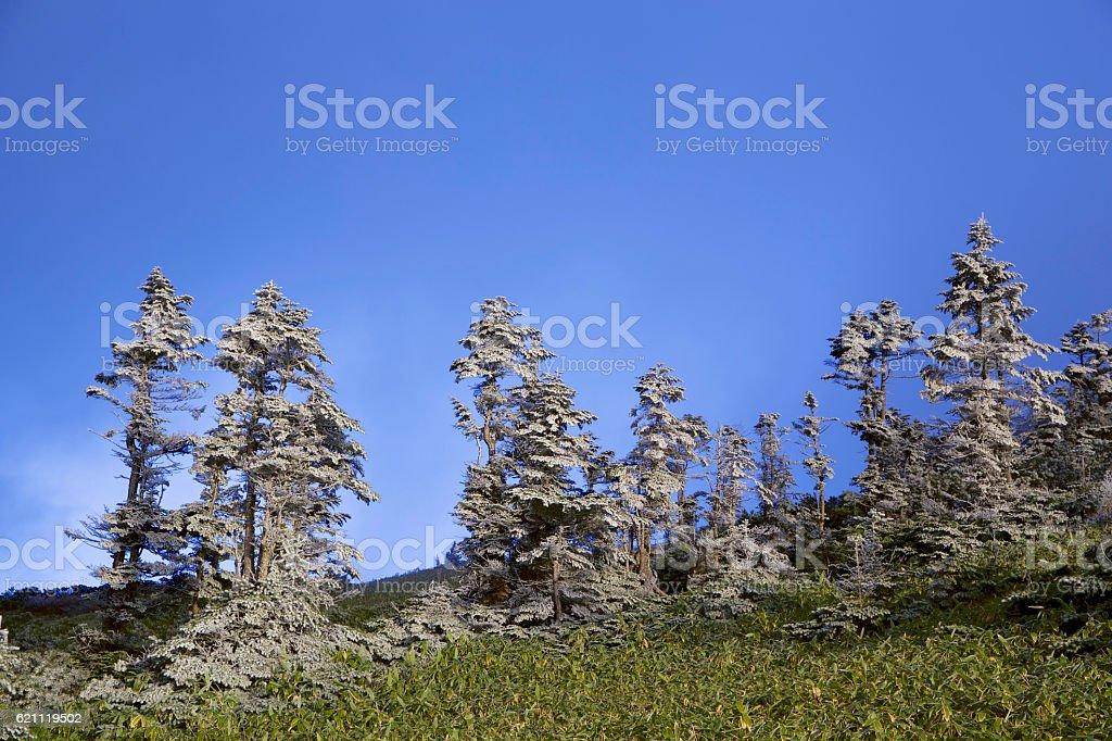 The rime landscape of the high plain stock photo