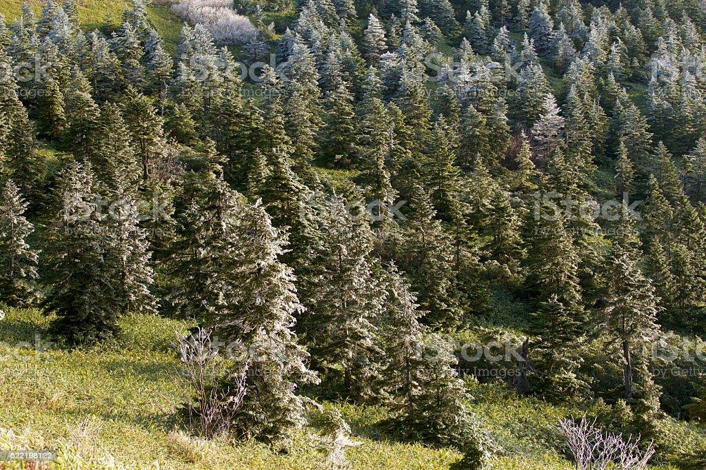 The rime landscape of the mountain range stock photo
