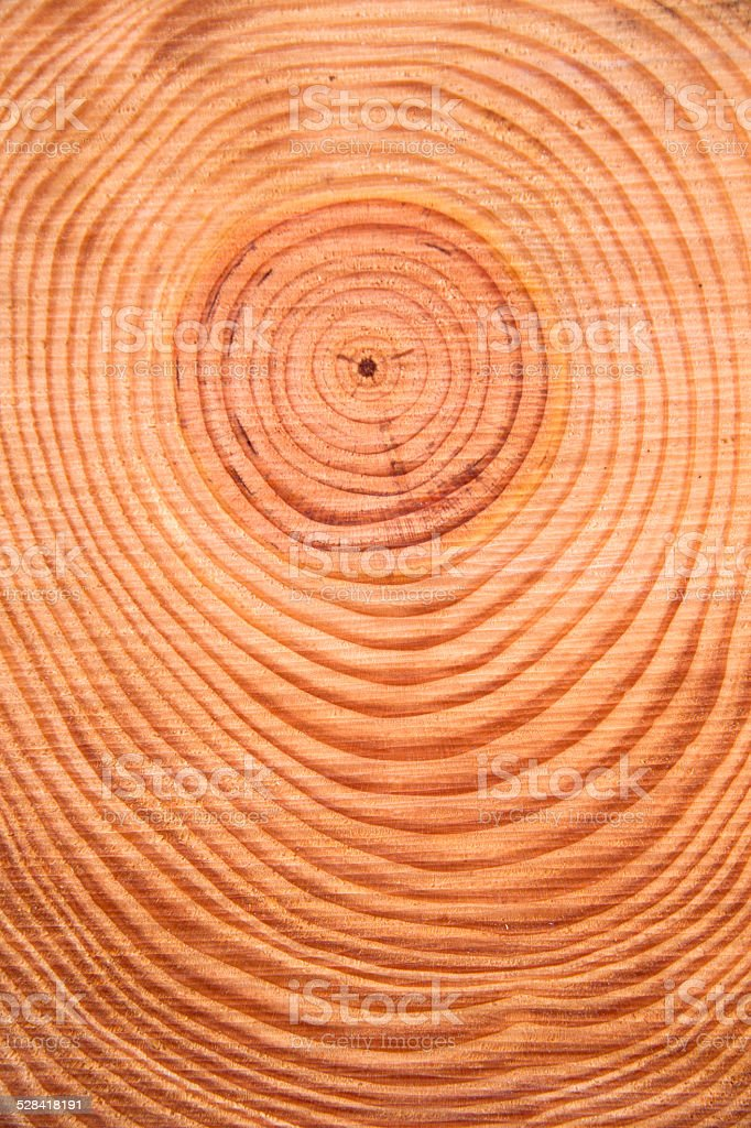 The rings of the pine tree stock photo