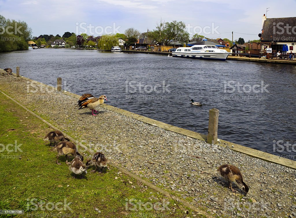 The river at Horning stock photo