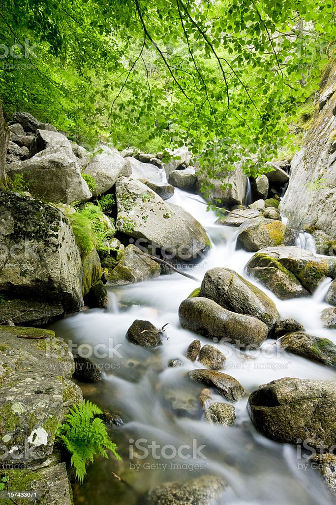 The river of happiness royalty-free stock photo