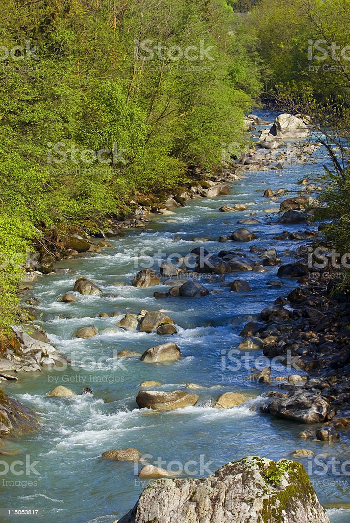The river royalty-free stock photo