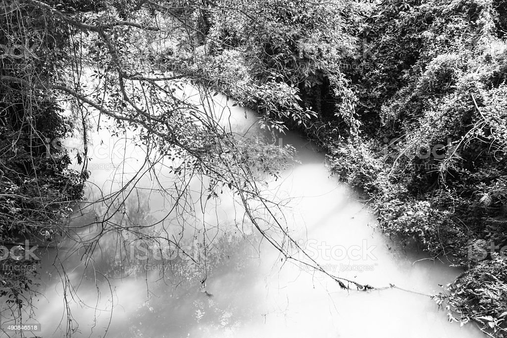 the rivulet in the jungle black and white background stock photo