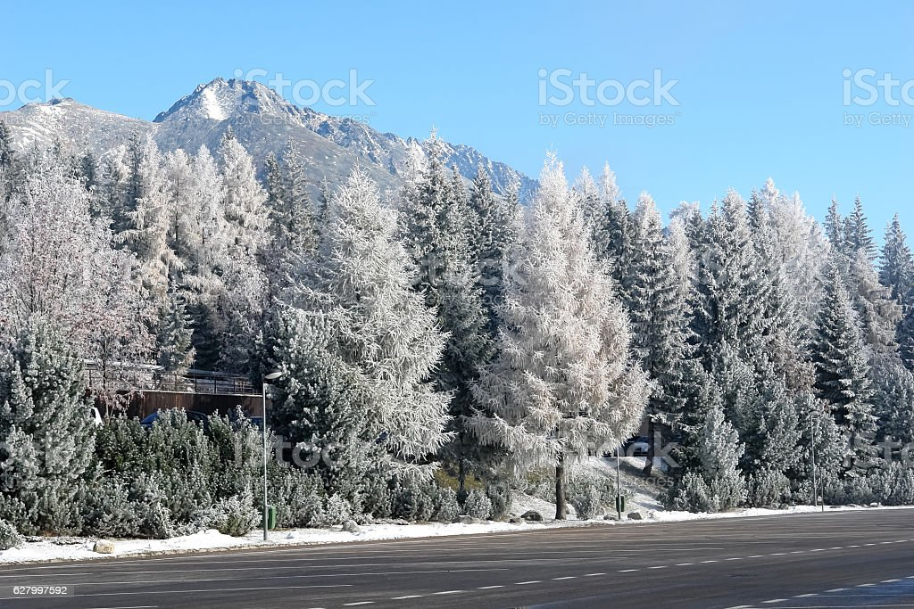 The road and snow-capped trees in Slovakia. stock photo