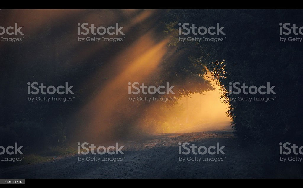 The road in the woods. Morning landscape. sunset stock photo