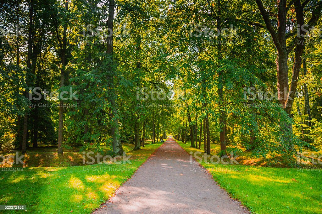 The road in the woods stock photo