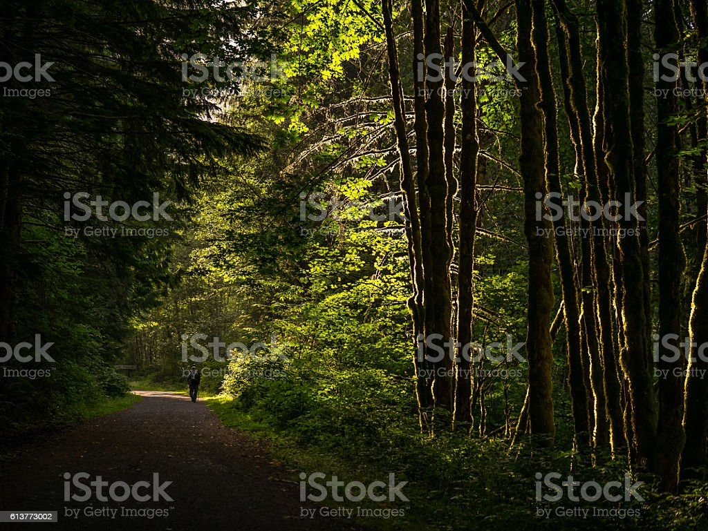 The road through the dense forest stock photo