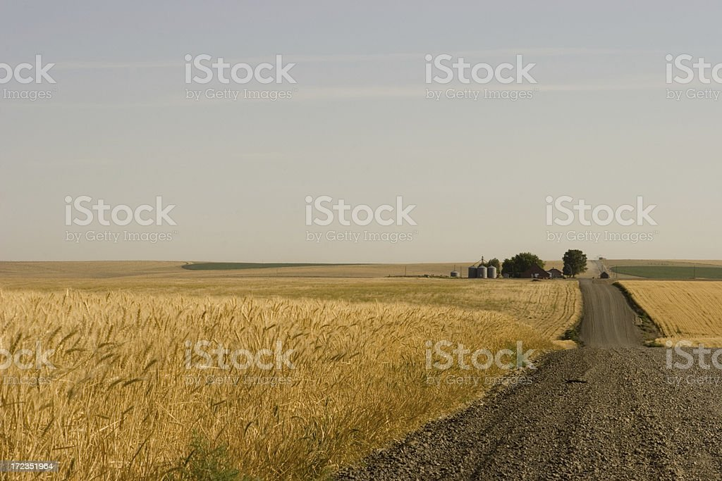 The road to wheat stock photo
