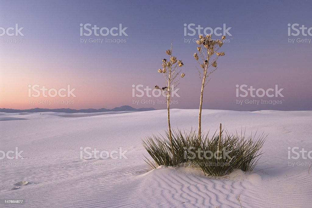 The Romance in White Sands Natioanl Monument stock photo