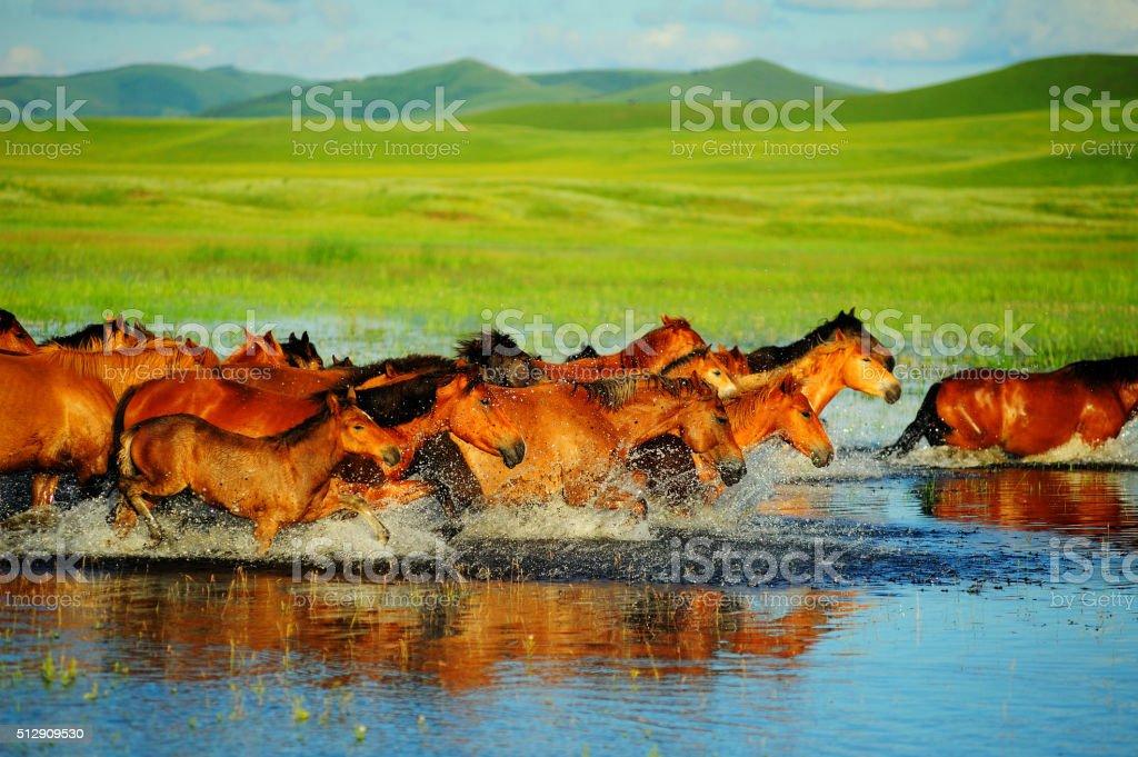 The running horses stock photo