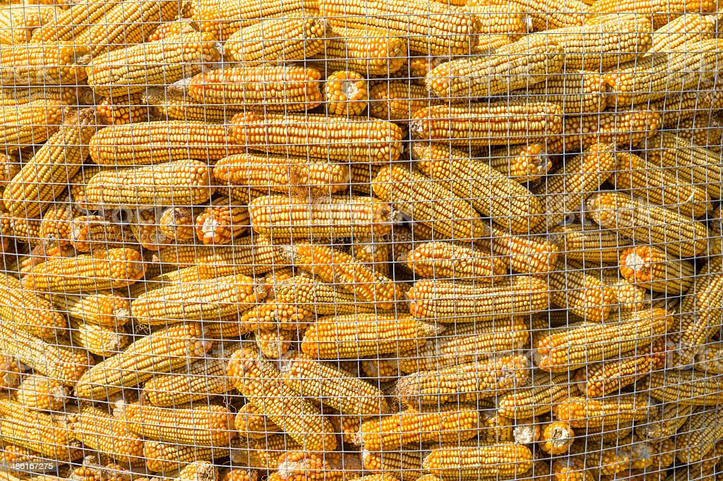 The rural home of corn drying stock photo