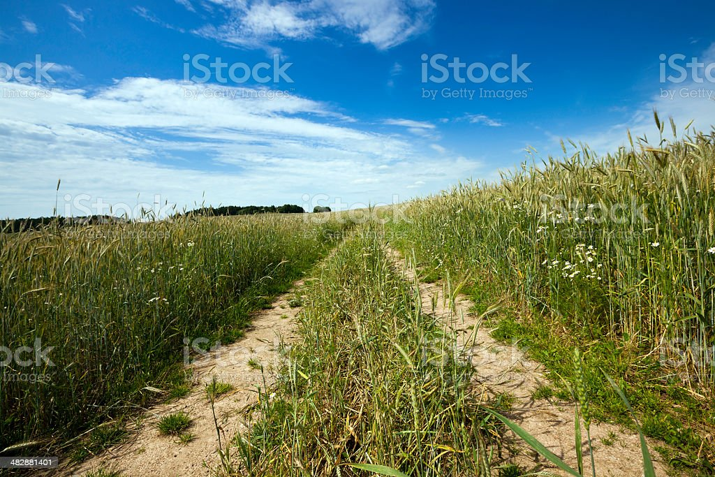 the rural road royalty-free stock photo