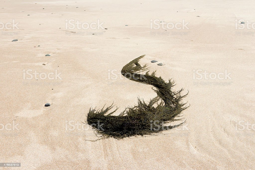 The s curved seaweed royalty-free stock photo