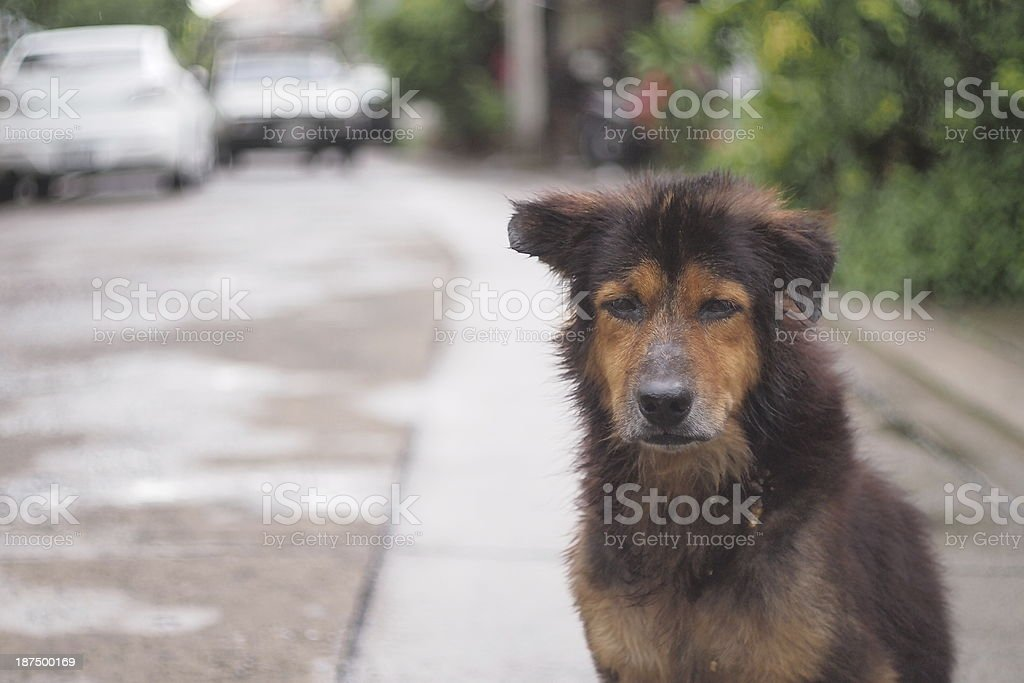 The sadness of dog. stock photo