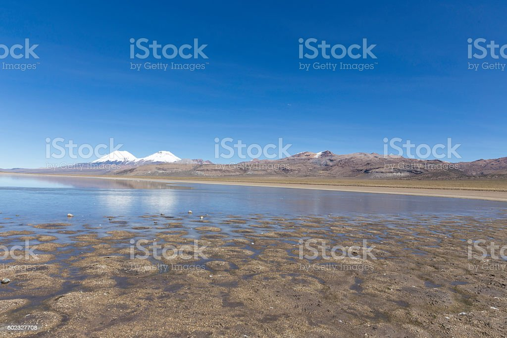 The Sajama National Park in Ranger of Bolivia- stock photo