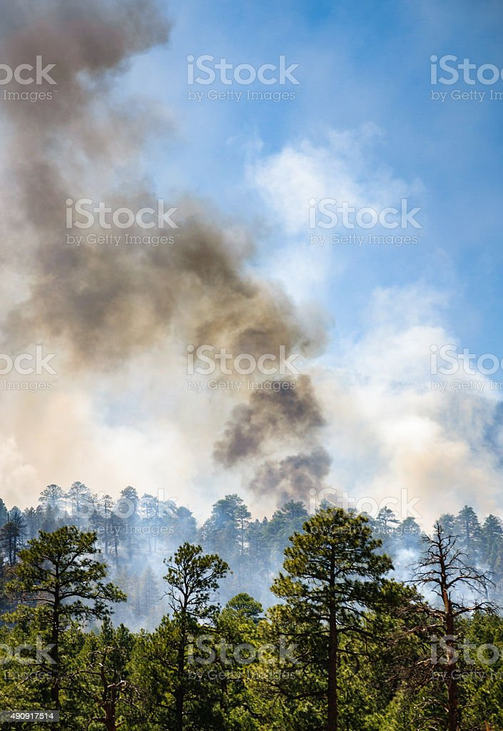 The San Francisco Peaks in Coconino National Forest stock photo