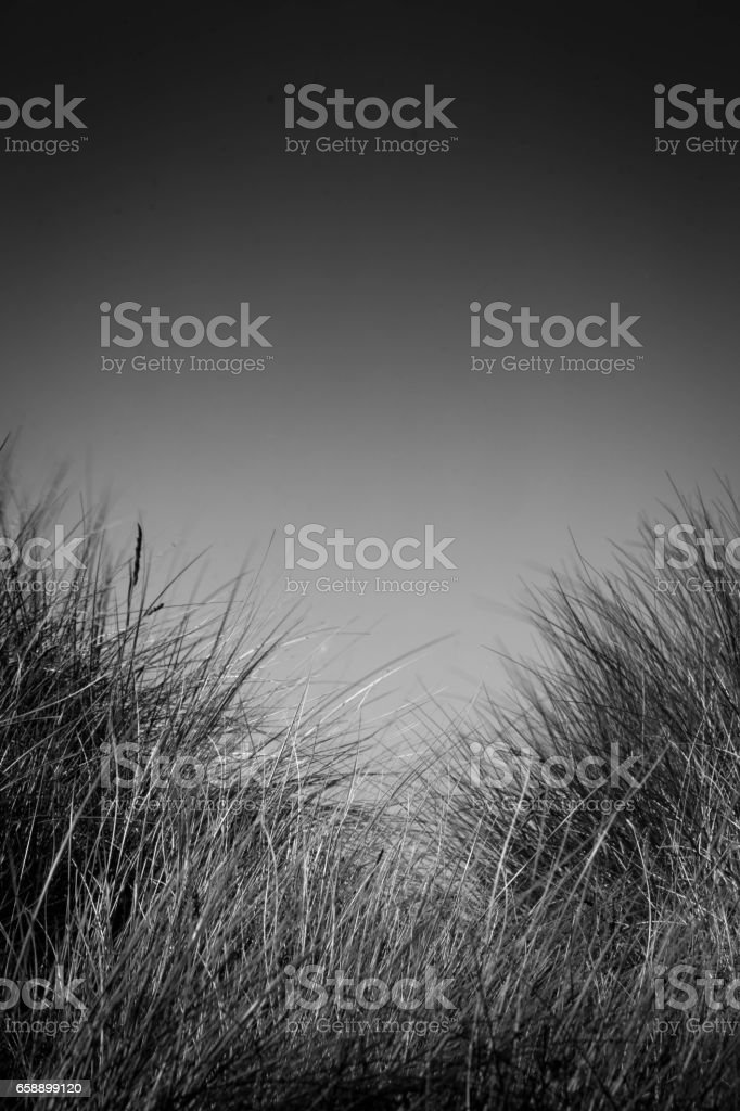The sand dunes at Warkworth stock photo