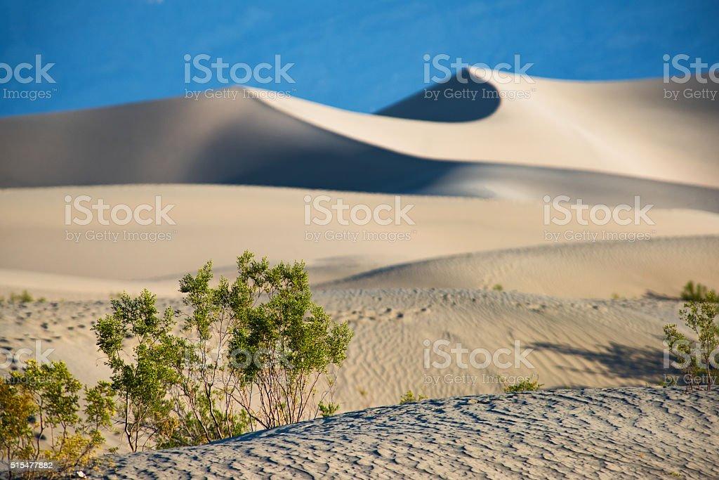 The Sand Dunes of Death Valley Alive With Green stock photo