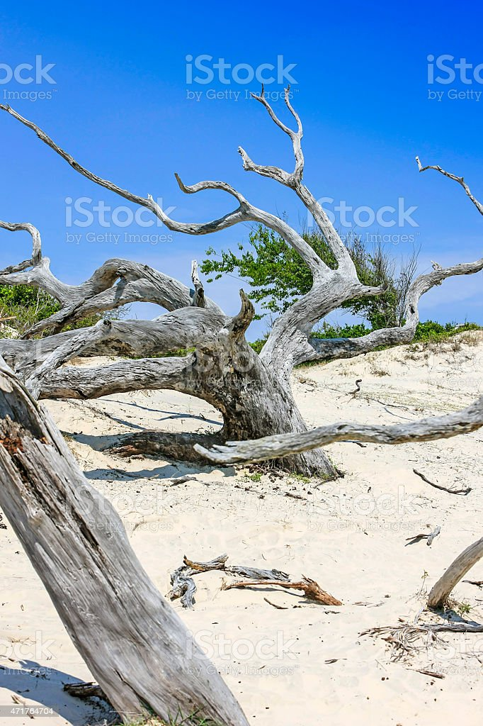 The Sand dunes on Cumberland Island, GA stock photo