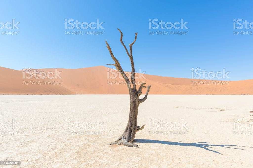The scenic Sossusvlei and Deadvlei stock photo