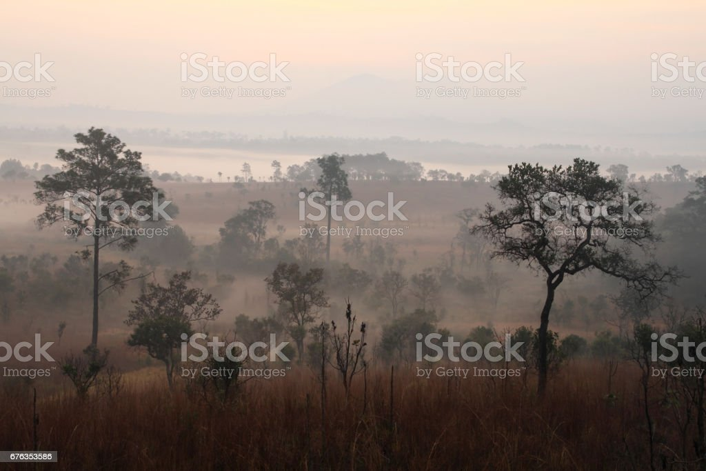The sea of mist in the forest meadow at Thung Salaeng Luang Nation Park, Thailand stock photo