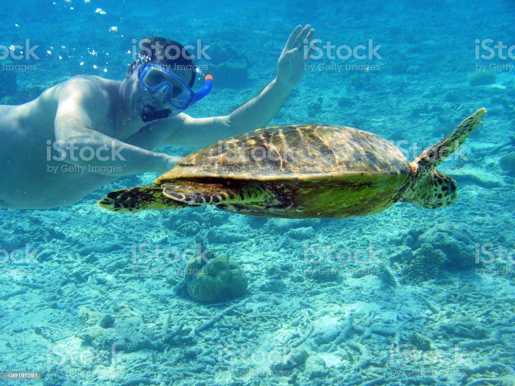 the sea turtle stock photo