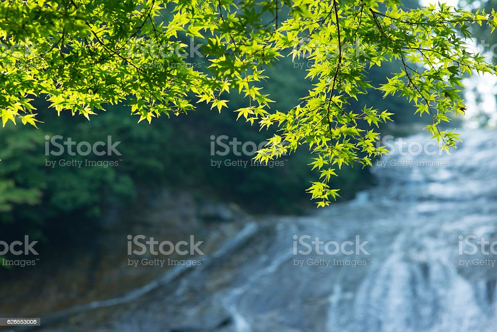 The season of the fresh green.Trees in the forest. stock photo