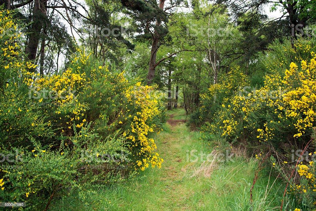 The Secret Woodland Path stock photo