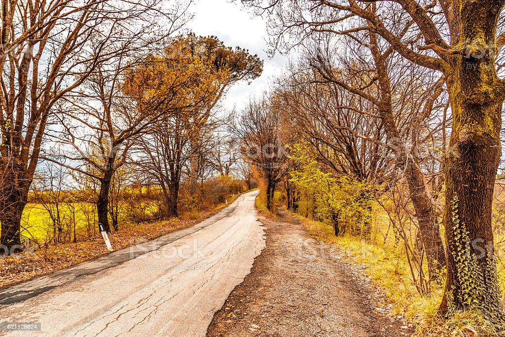 The serenity of a country road in spring stock photo