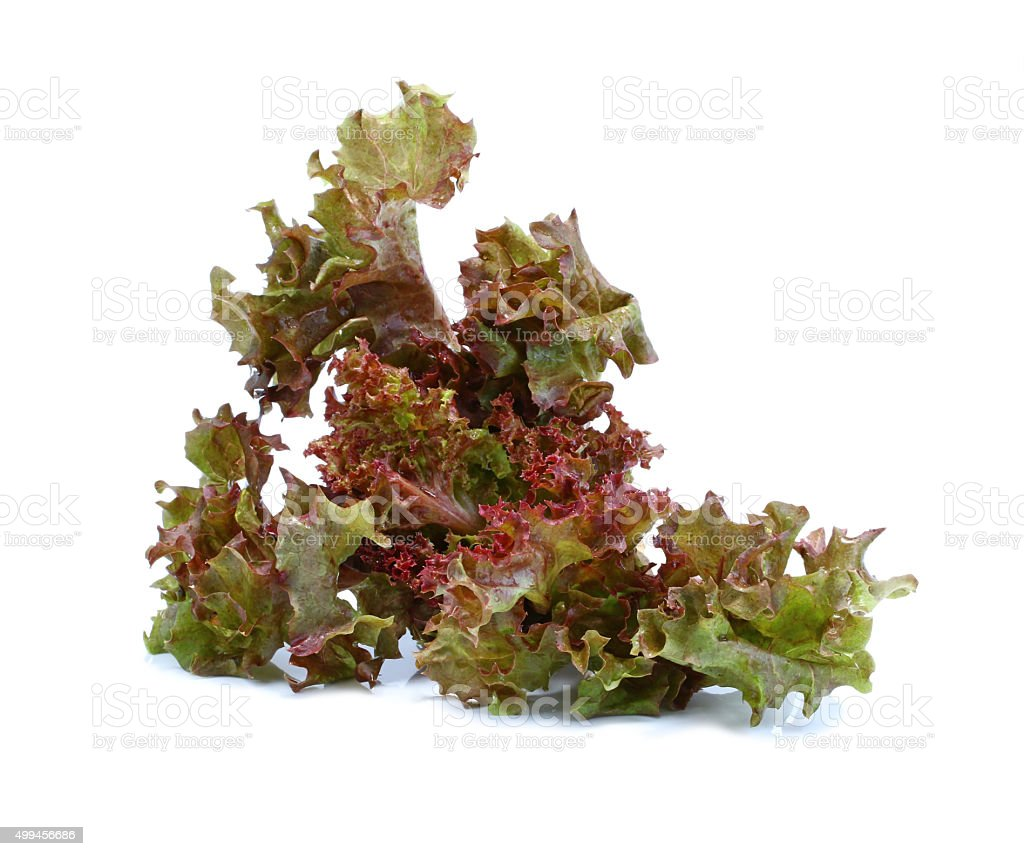 the sheet of curly violet lettuce against the white stock photo
