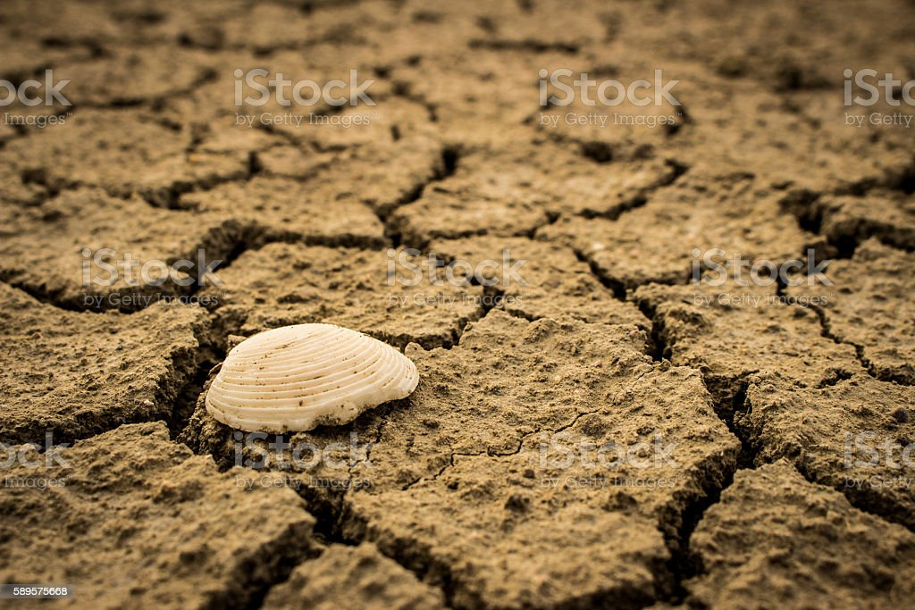 The shell Dry cracked earth texture background drought. stock photo