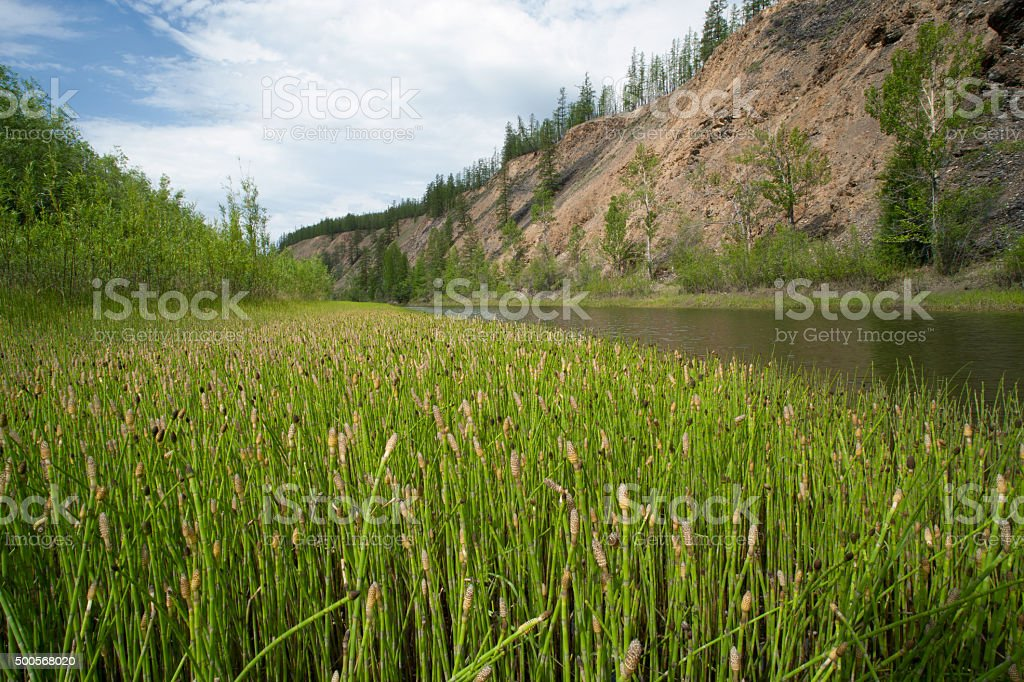 The shore of the river channels. stock photo