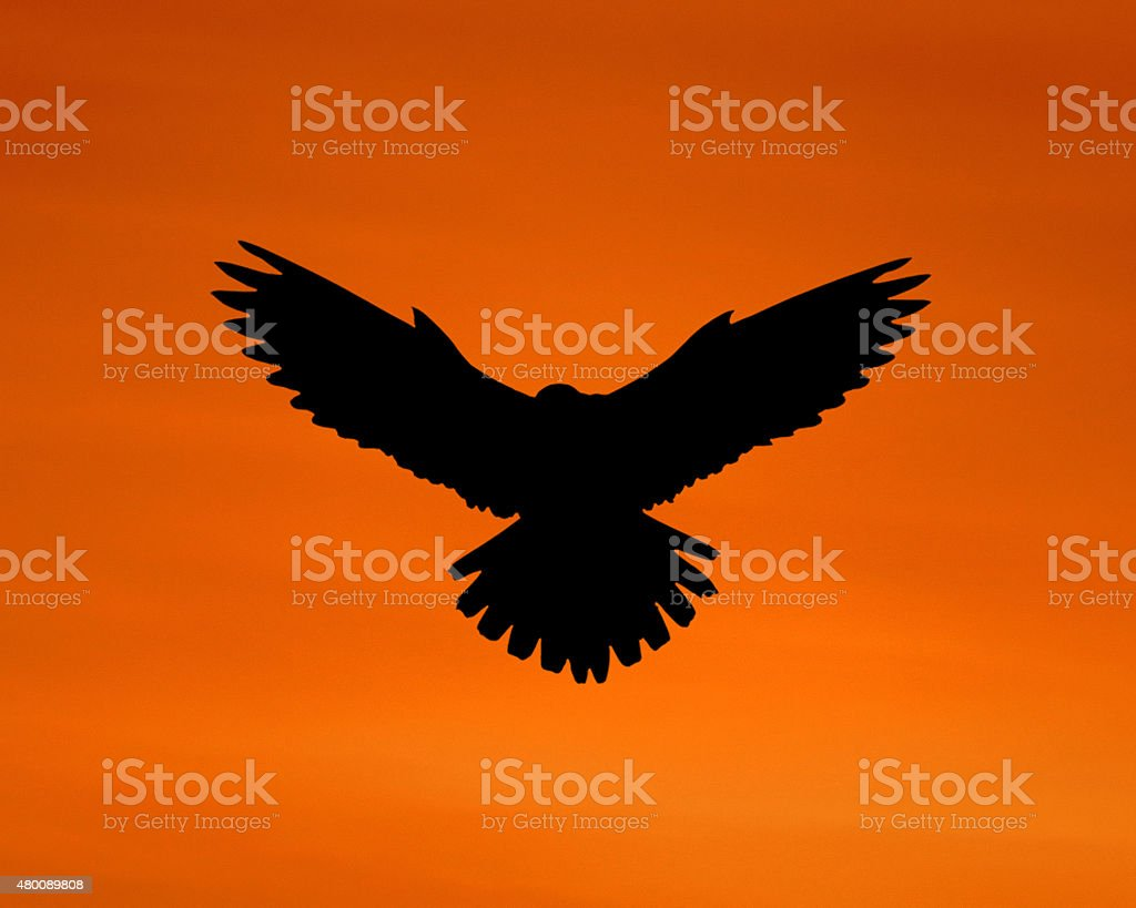 The silhouette of an eagle in the sky. stock photo