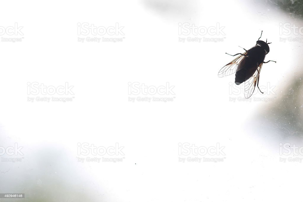 The silhouette of insect on the dirty window glass stock photo