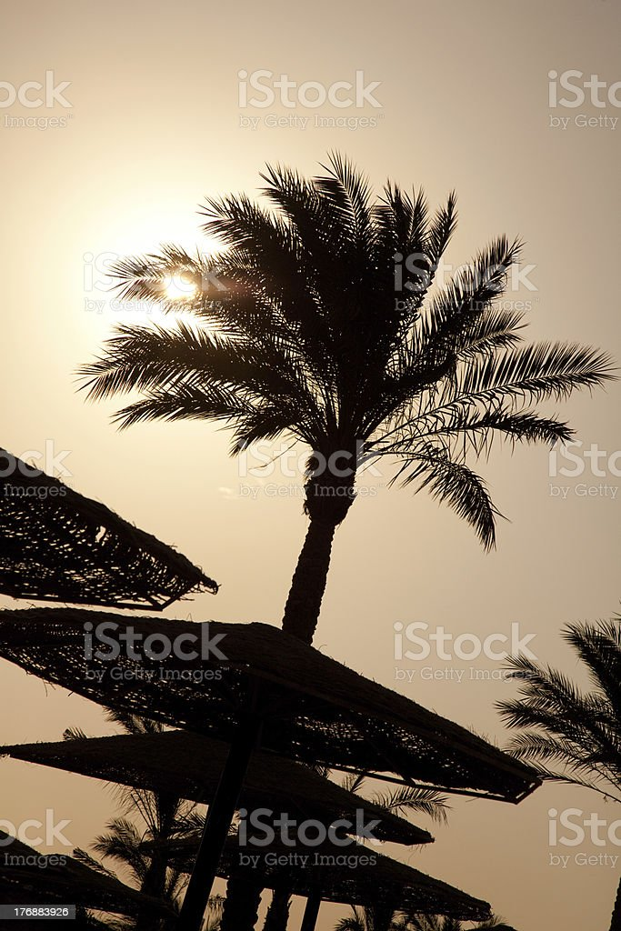 the silhouettes of palm royalty-free stock photo